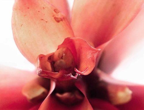 Bromelia la pianta che purifica l'aria
