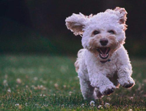Cinque-curiosità-sui-nostri-amici-cani