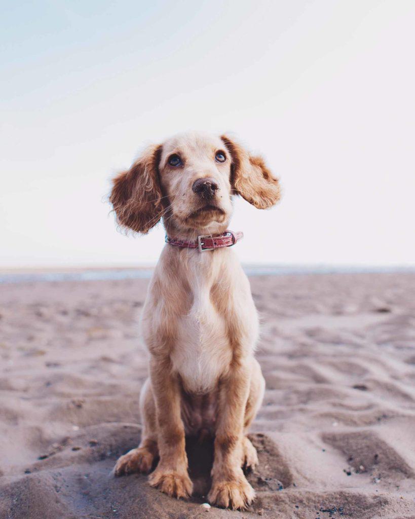 Cinque-curiosità-sui-nostri-amici-cani2