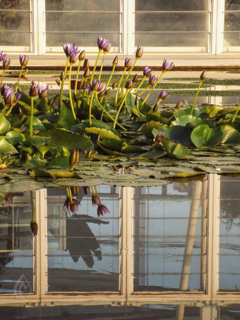 Ecco-cinque-curiosità-sull'orto-botanico-di-padova